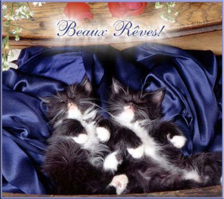 Beaux rêves chatons