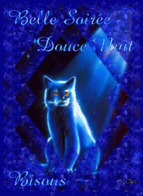 Belle soirée douce nuit bisous chat