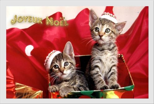Noël joyeux noël chats - Centerblog